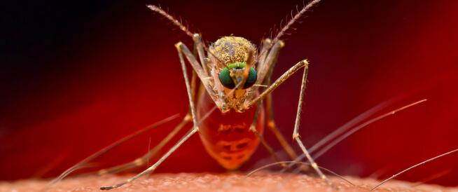الأمراض التي ينقلها البعوض