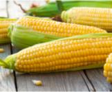 فوائد الذرة الصفراء لمرضى السكر