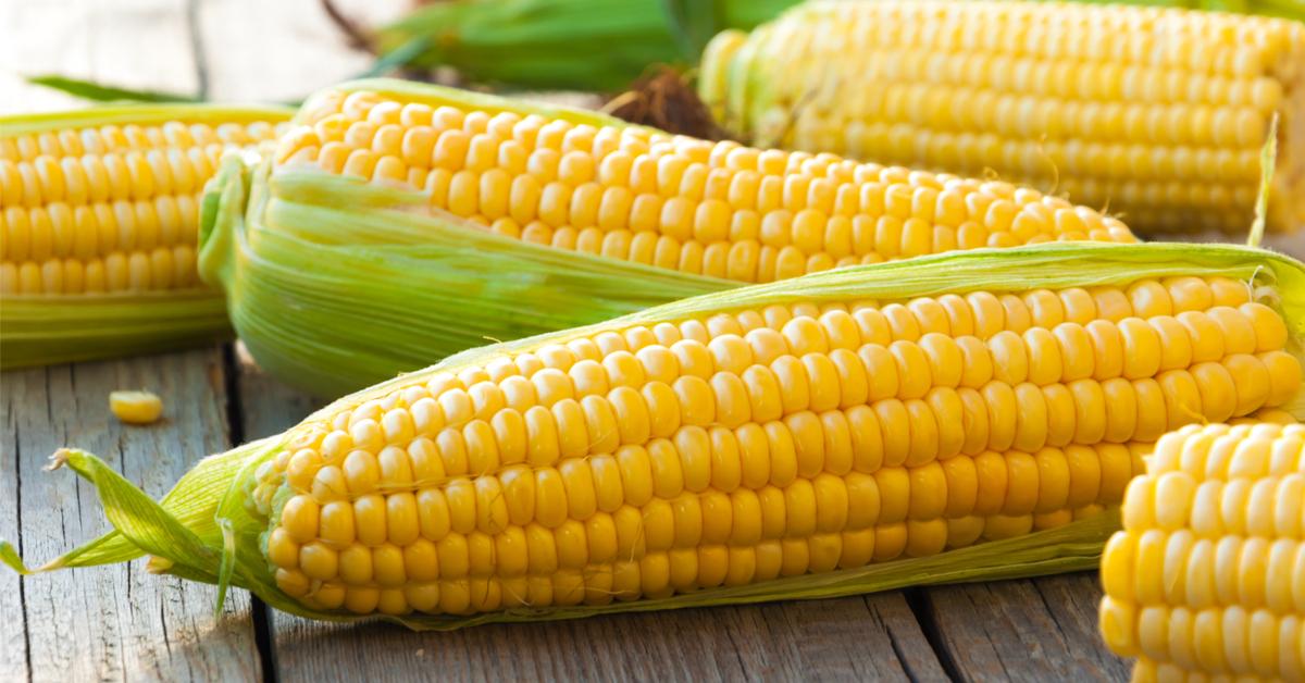 فوائد الذرة الصفراء لمرضى السكر ويب طب
