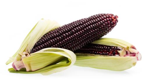 فوائد الذرة الحمراء تعرف عليها ويب طب