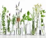 علاج الاستفراغ بالأعشاب: هل هو ممكن؟