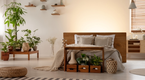 أضرار النباتات في غرفة النوم