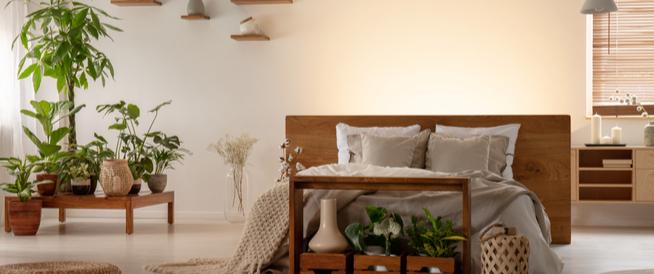 أضرار النباتات في غرفة النوم على الصحة