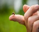 فوائد لسع النحل للأعصاب