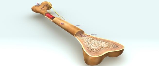 خلايا العظام: دليلك الشامل