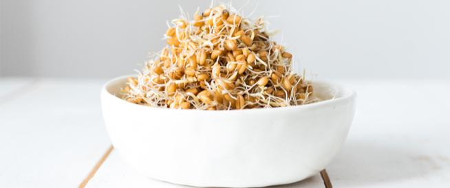 القمح المبرعم: فوائد عديدة، وقيمة غذائية عالية