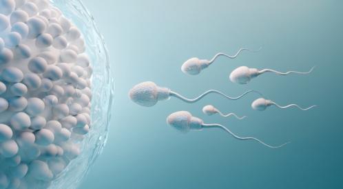 متى ينزل كيس الحمل الفارغ