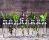 علاج حساسية الحمل بالأعشاب وبطرق طبيعية أخرى