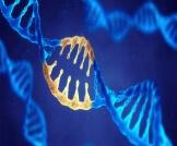 داء هارتنب: مرض وراثي نادر