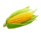 أضرار الذرة