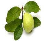 أضرار ورق الجوافة