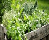توسيع عنق الرحم بالأعشاب