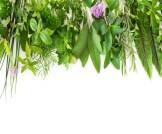 علاج وتر العرقوب بالأعشاب