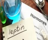 تحليل هرمون اللبتين
