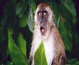 جدري القرود: مرض فيروسي نادر