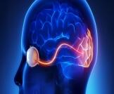أمراض العصب البصري