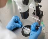 الحمل الطبيعي والحمل بالحقن المجهري