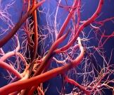طول الأوعية الدموية في الجسم