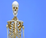 وظائف العظام