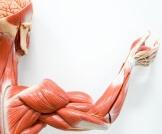 أمراض تصيب العضلات