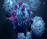 المعدل الطبيعي للخلايا اللمفاوية