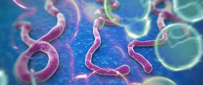 تعرفوا على مرض وفيروس الإيبولا واعراضه