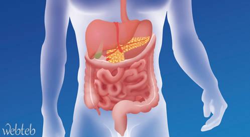 كيف يعمل الجهاز الهضمي