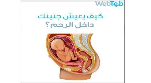 كيف يعيش جنينك داخل الرحم؟