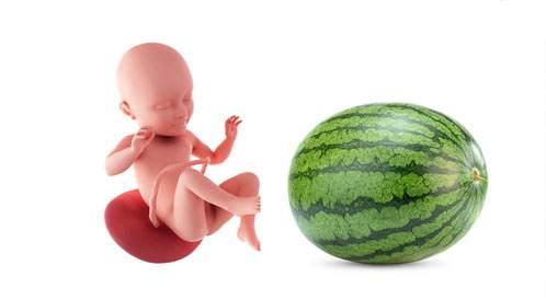 الحمل تجربة مشتركة لكلا الزوجين - تشاركاها بحب مع طب بيبي