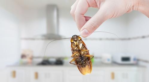 حماية منزلك من الحشرات