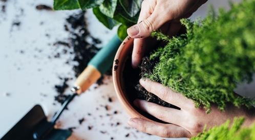 زراعة الخضار منزلياً