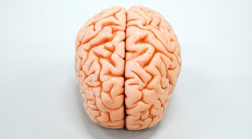 دماغ الإنسان آخذ بالتقلص