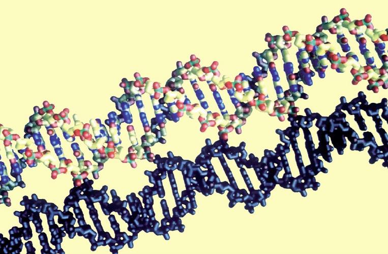 شريط DNA الذي ينقل كافة المعلومات الوراثية عبر الأجيال.