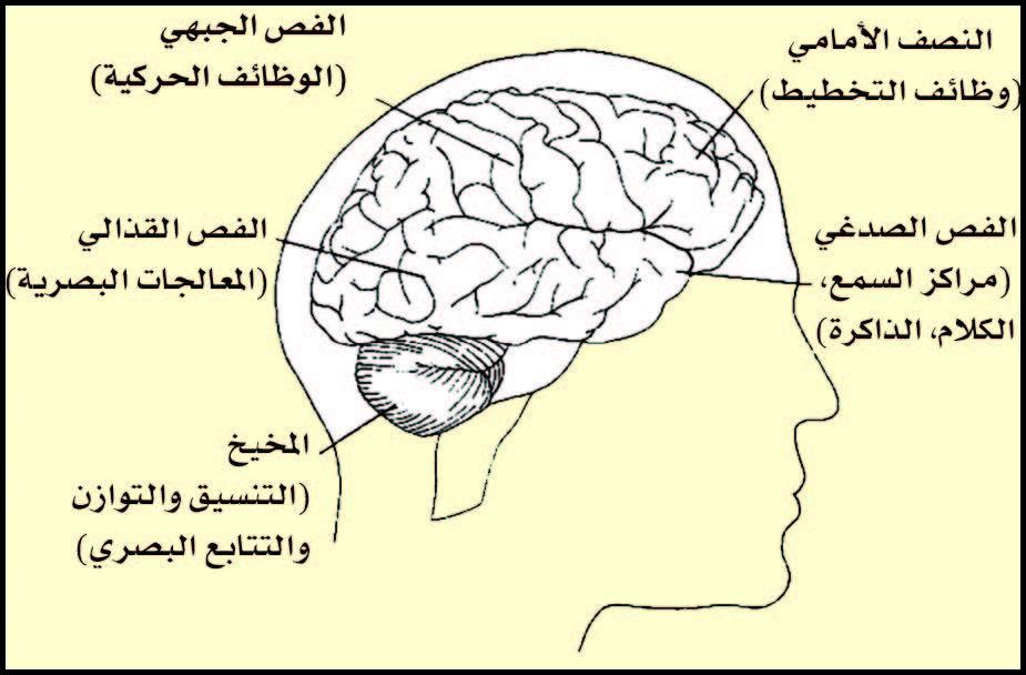 وظائف الدماغ.