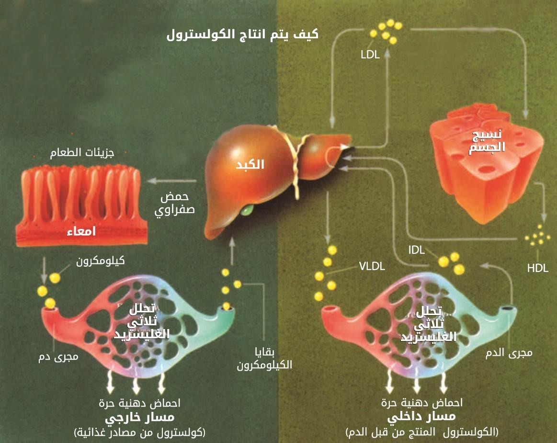 ما هو الكولسترول وما هي انواعه ويب طب
