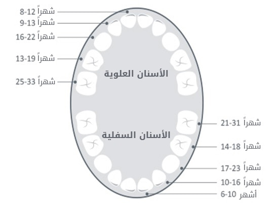 ترتيب ظهور الاسنان مع نمو وتطور الطفل
