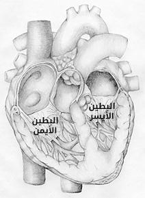 cardic cycle