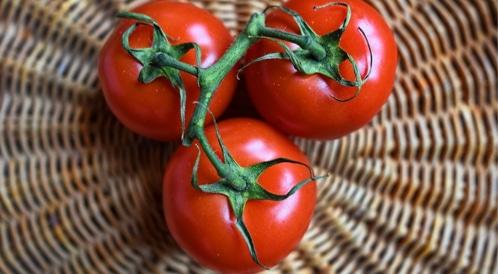 طماطم حمراء