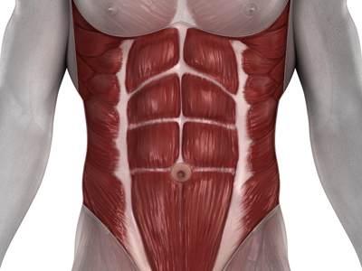 صورة تشريحية لعضلات البطن