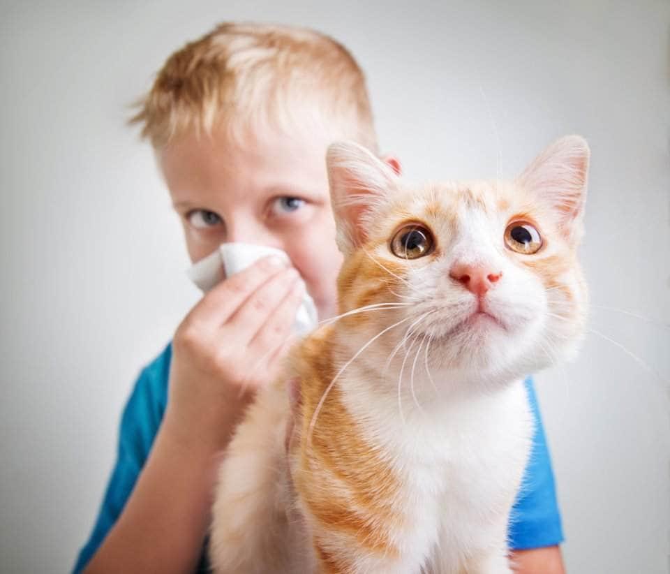نتيجة بحث الصور عن حساسية الاطفال من القطط