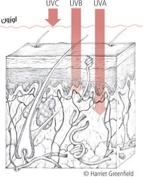 UV ESSENTIAL يو في إيسانشل كريم العناية اليومية لحماية متكاملة ضد الأشعة  فوق البنفسجية وضدّ التلوّث عامل حماية من الشمس بنسبة 50 - مستحضرات للعناية  بالبشرة ...