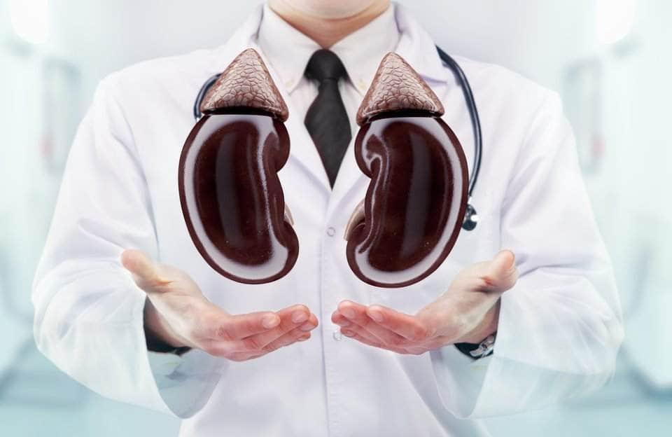 صورة طبيب يحمل بيديه كليتين