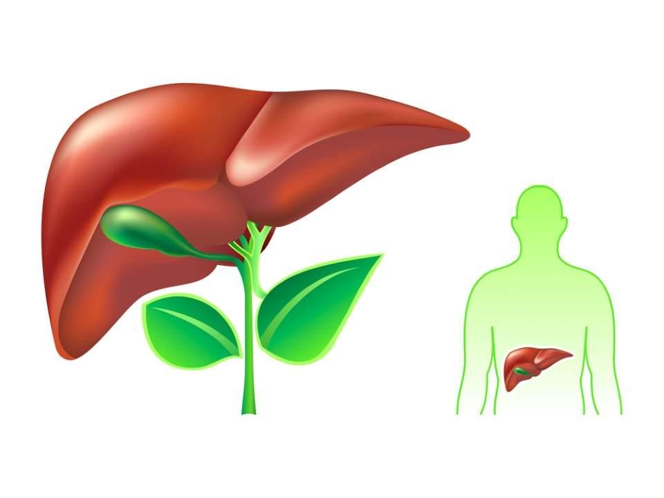 liver(1).jpg