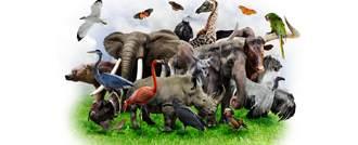 حيوانات خطيرة