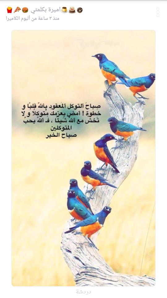 صورة صاحب التعليق - Djdالحب Fkfb