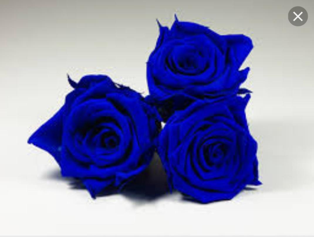 الورده الزرقاء
